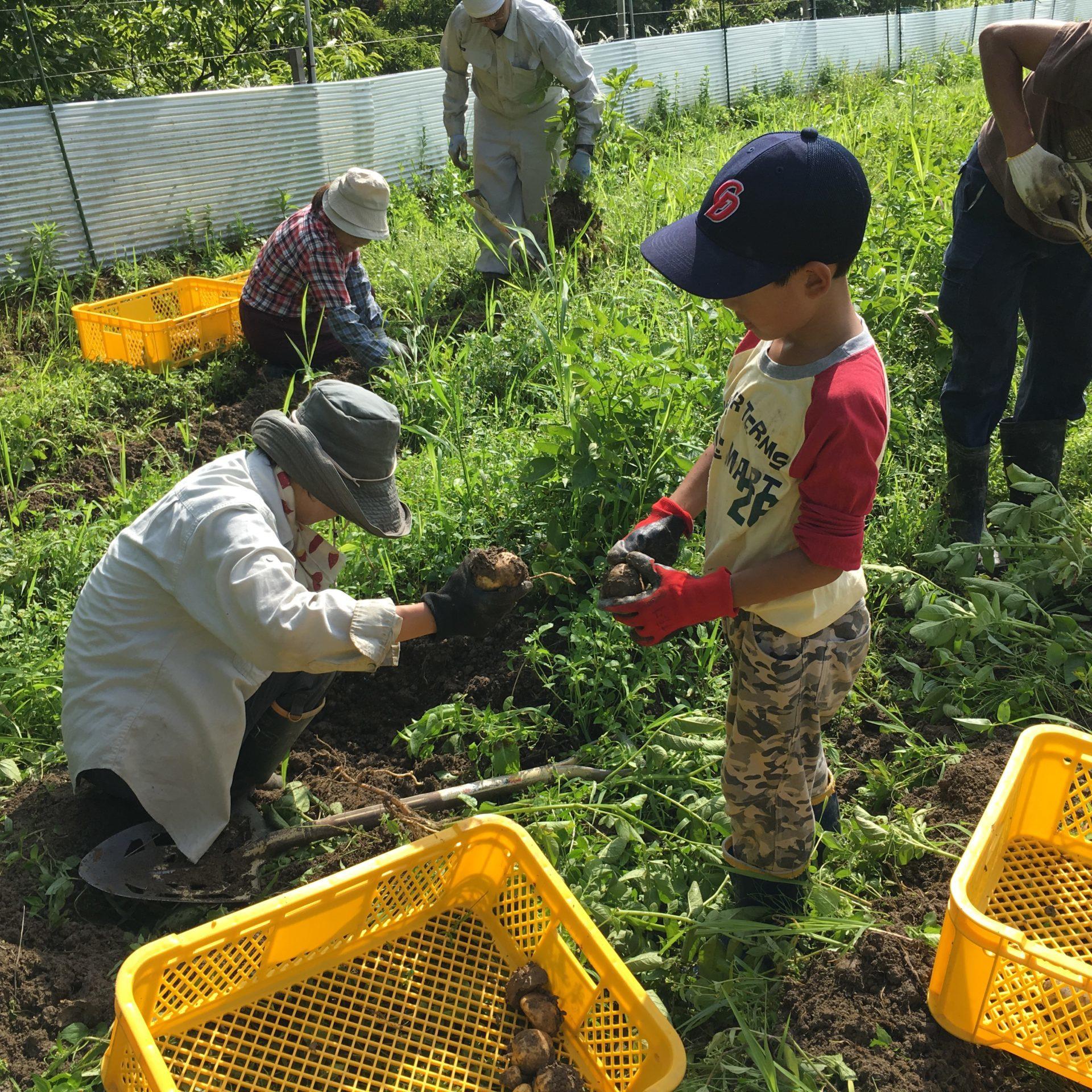 農業体験イベント