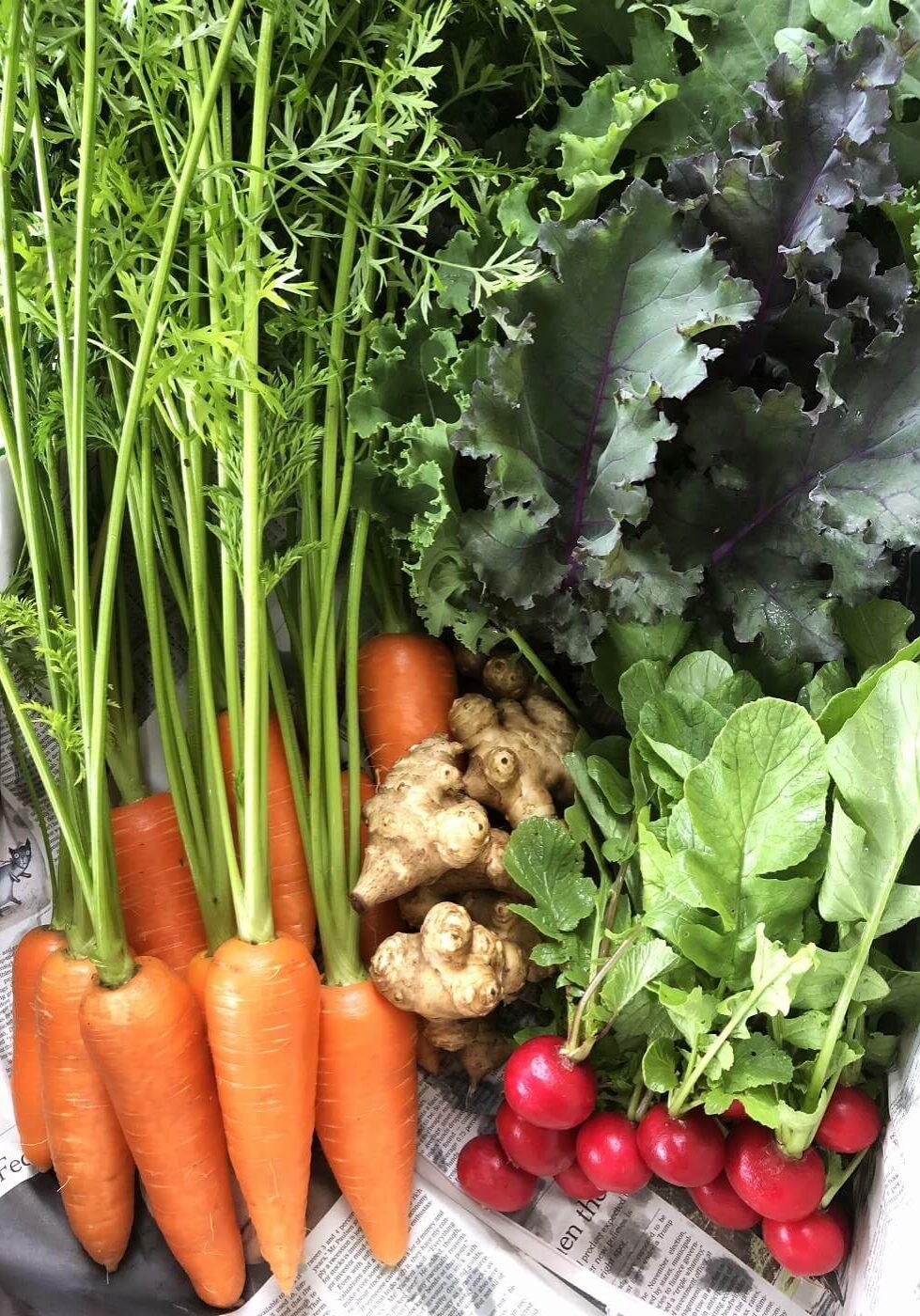 野菜セット01
